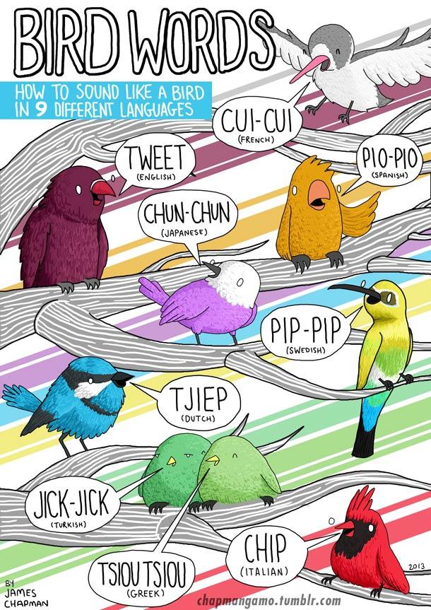 oiseau-cuicui-bruit-plusieurs-langues-esprit-freelance
